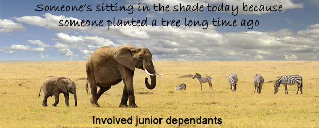 Involve junior dependents